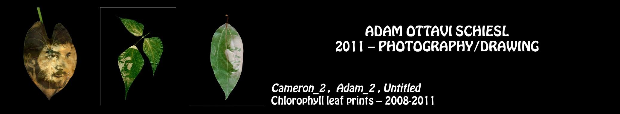 Adam Ottavi Schiesl - photography, drawing - Cameron 2, Adam 2, Untitled, Clorophyll leaf prints - 2008-2011