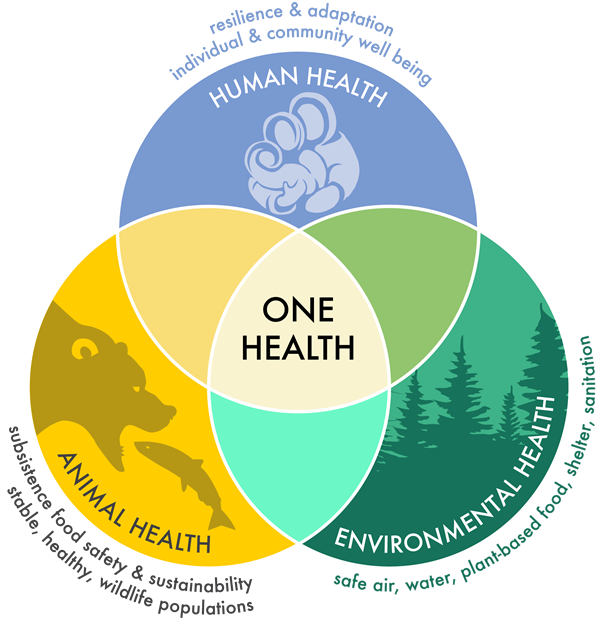 One Health ven diagram illustrating the interdependence of human, animal and environmental health